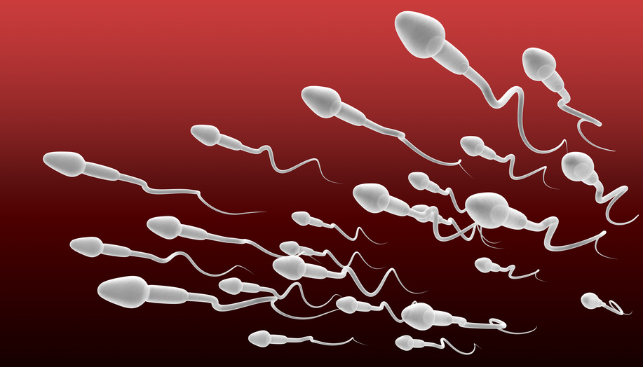 Improve Sperm Motility Naturally Food