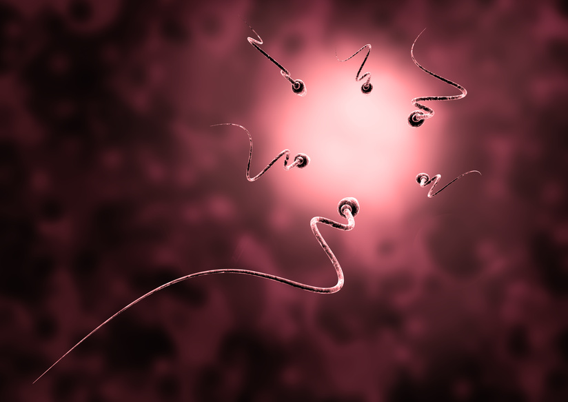 sperm and egg cell - Natural insemination -